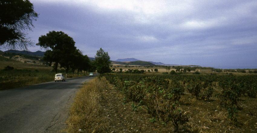 ティパサの画像 p1_35